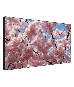 LCD панель Sharp PN-V601